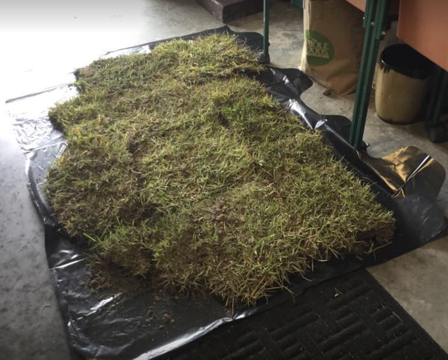 picture of sod I put down in my garage so my dog could go potty without having to go out into the storm.